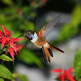 Sip Sip by Charmaine Albury - Animals Birds