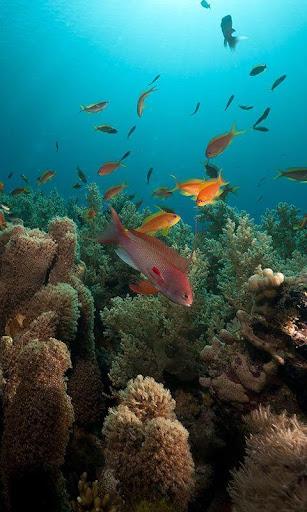 個人化必備免費app推薦 海洋鱼类动态壁纸線上免付費app下載 3C達人阿輝的APP