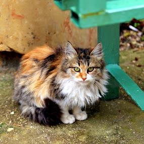 Cat by Leong Jeam Wong - Animals - Cats Portraits ( kitten, cat, fur, rest, pretty )