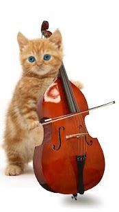 有趣的貓。跳舞和演奏