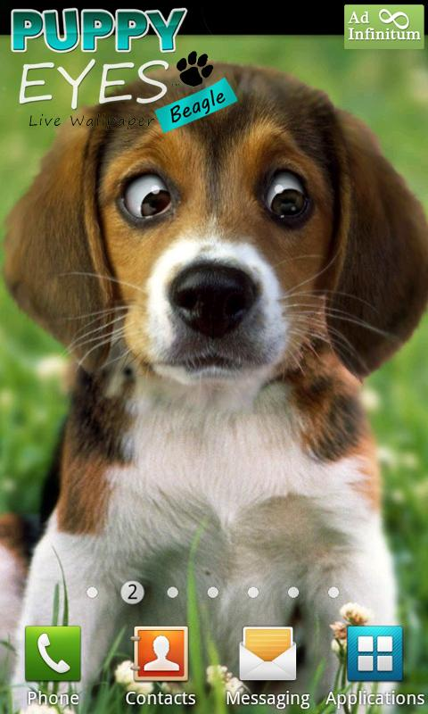 Puppy beagle live wallpaper android apps on google play