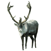 Reindeer Front Sticker