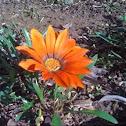 flower unknown
