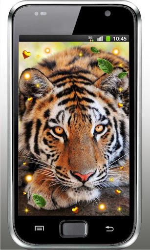 Tiger Love live wallpaper