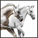 Horse Owner's sidekick