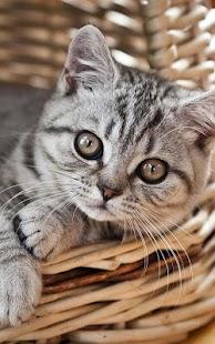 Koťata živé Tapety - náhled