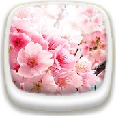 Cherry Blossom★ Wallpaper 03