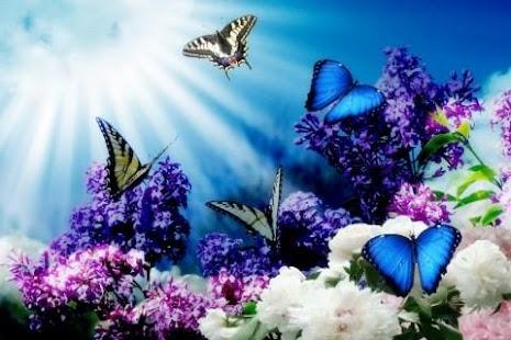 Download 3D Butterfly Live Wallpaper HD Google Play ...