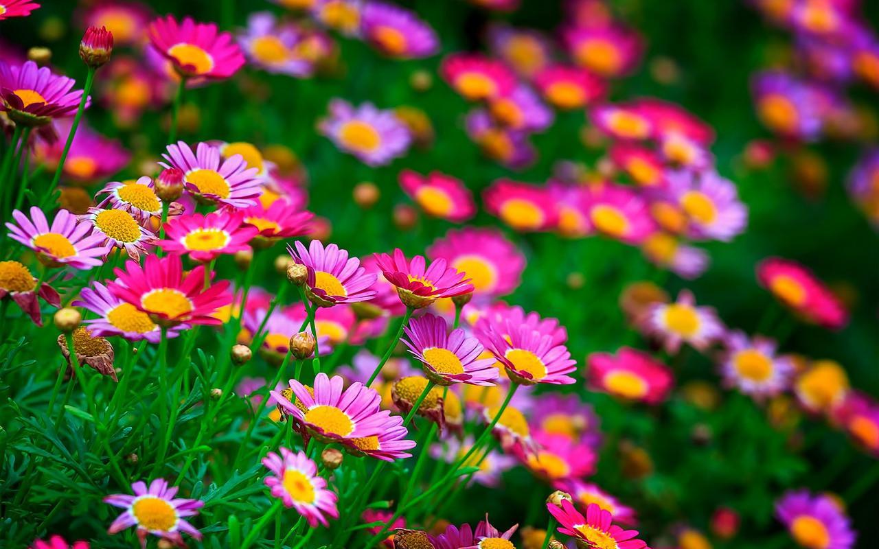 Flowers Live Wallpaper Revenue Download Estimates Google Play