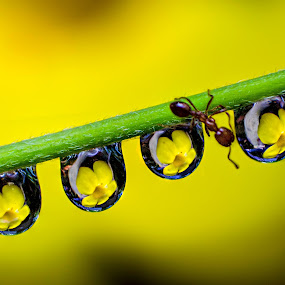 DROPS N ANT by Bivin Lal Photography - Nature Up Close Natural Waterdrops (  )