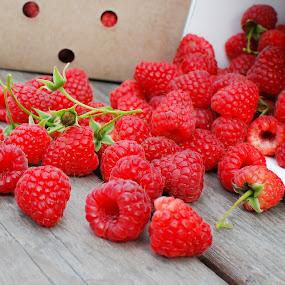 Spilled Berries by David Kreutzer - Food & Drink Fruits & Vegetables ( home grown, fresh picked, spilled, raspberries, berries )