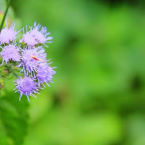 by Wibi Prayogo - Flowers Flowers in the Wild