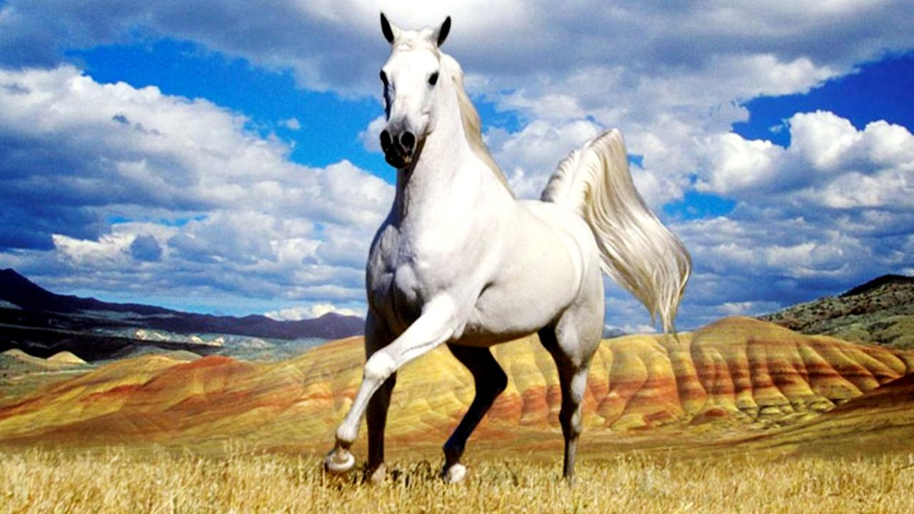 Horse live wallpaper android apps on google play for Sfondi di cavalli gratis