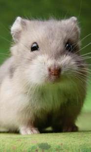 Crazy Hamster Pet - screenshot thumbnail