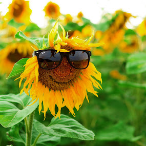 What? I'm happy! :) by Teglas Marin - Flowers Flower Arangements ( hope )