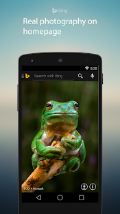 Bing Search- screenshot thumbnail