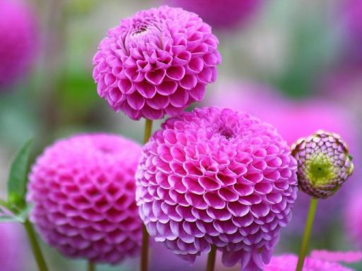 粉紅色的花壁紙