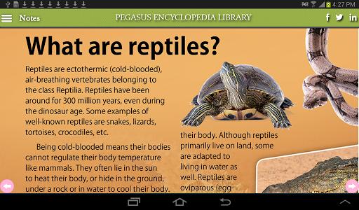 Sea World-Marine Reptile