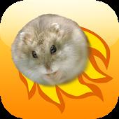 Hamster Basket