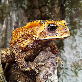 toad by Hendrata Yoga Surya - Instagram & Mobile Android