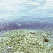 綺麗な海の壁紙素材物件vol18