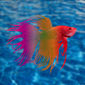 Free Betta Fish Care Tips