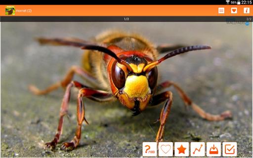 免費下載個人化APP|昆虫壁纸HQ app開箱文|APP開箱王