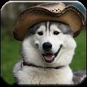 Husky - HD Wallpapers icon