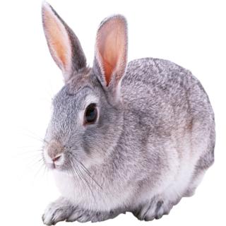 Widgets store: Bunny