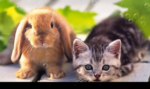 免費下載個人化APP|超可爱猫咪动态壁纸 app開箱文|APP開箱王