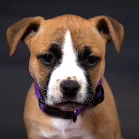 Puppy by Chad W - Animals - Dogs Puppies ( tiny, pitbull, little, puppy, pit, cute, dog )