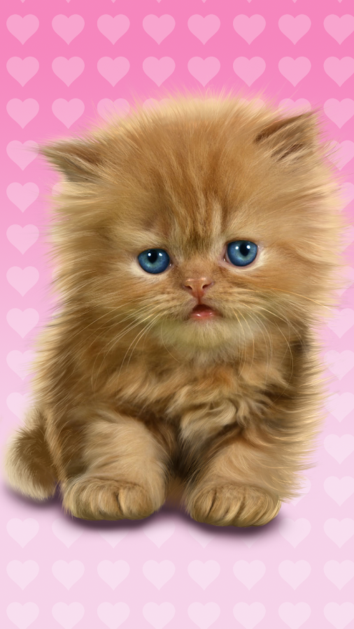 Baby Cat, Cute Live Wallpaper- screenshot