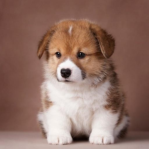 可愛的小狗 個人化 App LOGO-APP試玩