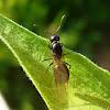 Ant / Mrav ♀