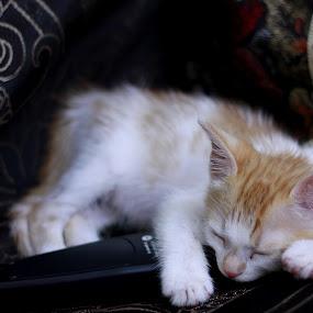 Cute Kitty by Karthic Kumar - Animals - Cats Kittens ( model, kitten, girl, cute, kitty )
