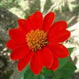 Philippine Flowers