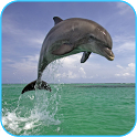 Dolphin 3d. Video Wallpaper icon