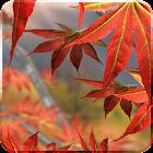 Autumn Tree Live Wallpaper icon