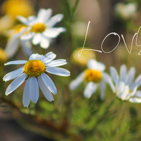 Love by Tammy Drombolis - Typography Words