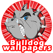 Bulldog Wallpapers