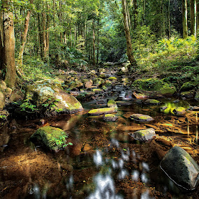 Macquarie pass NSW by Chris Gonzalez - Landscapes Forests ( colour, water, leafs, green, trees, forest, shade, rocks, light,  )