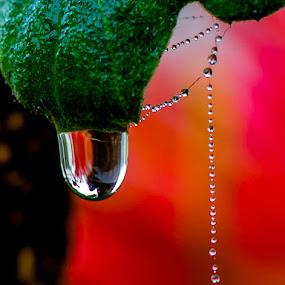 Pearls by Sanjeev Goyal - Nature Up Close Natural Waterdrops ( get, set, run, and, go )