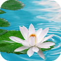 Lily on Water Live Wallpaper icon