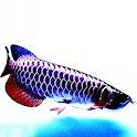 3D lucky fish logo