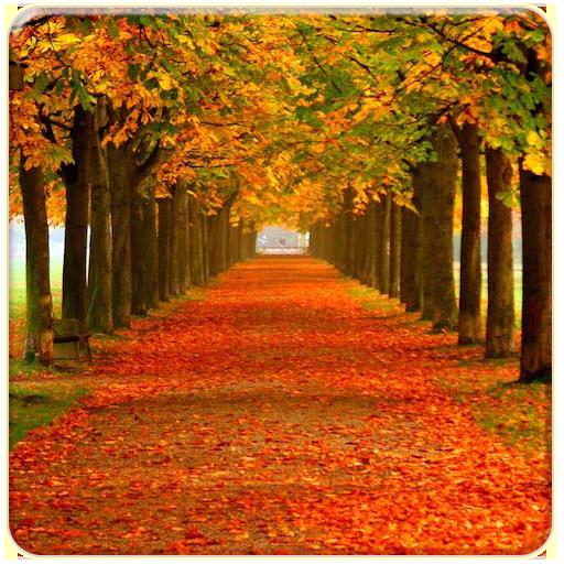 Autumn Live Wallpapers LOGO-APP點子