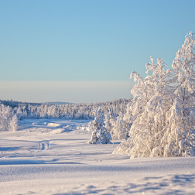 Snow in the north by Elisabeth Johansson - Landscapes Mountains & Hills ( sweden, winter, boden, cold, snow, trees, day, sun,  )