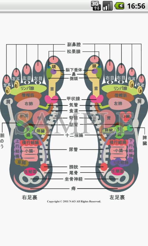 Reflexology foot chart - screenshot