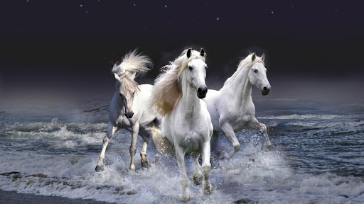 Horse HD Live Wallpaper Animal