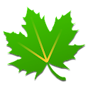 It's a maple leaf, not a pot plant you hoser