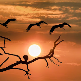 by Mukesh Chand Garg - Landscapes Travel ( #garyfongdramaticlight, #wtfbobdavis, wildlife photography, bird images, bird photos, nature photography, wildlife photos, bird photography )